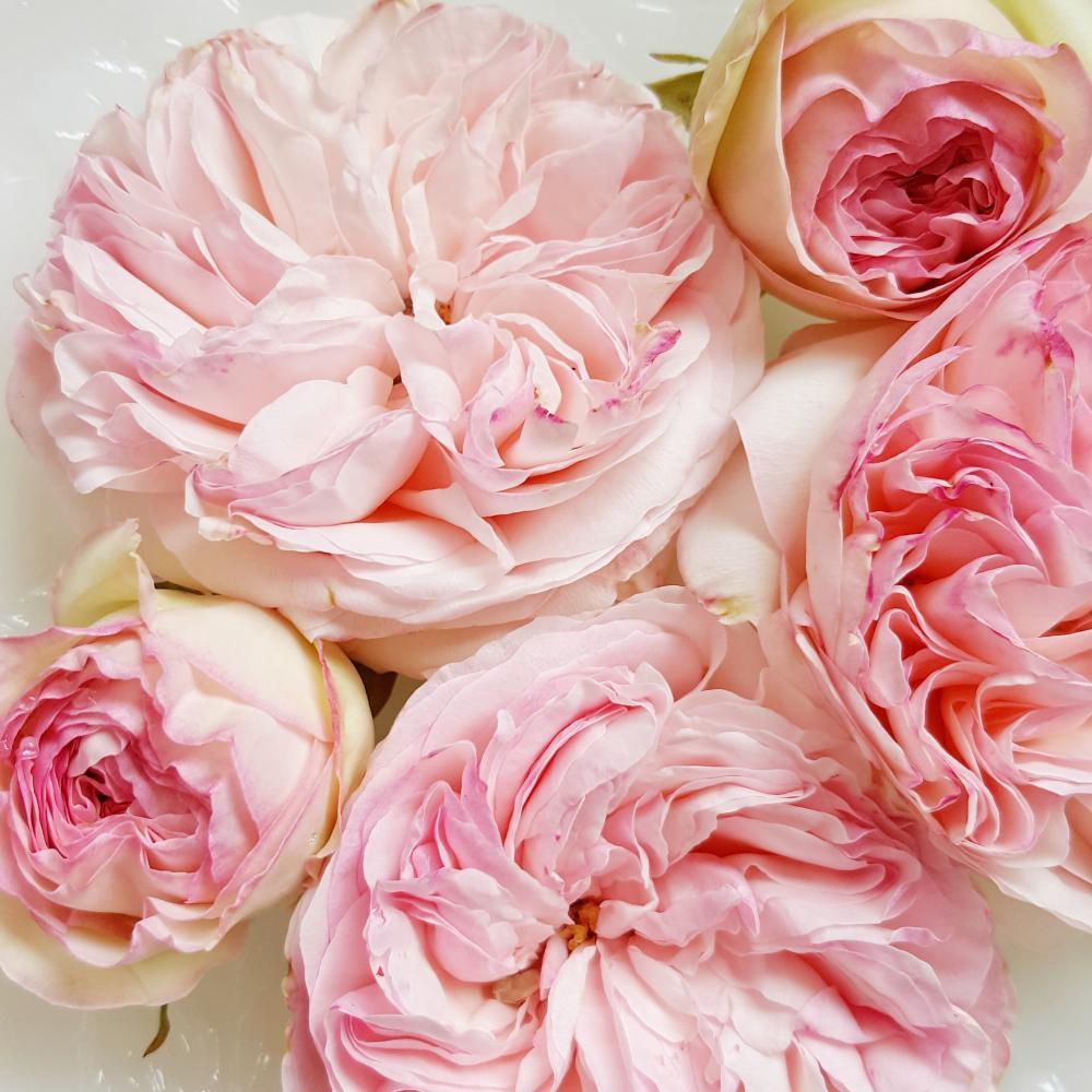 Garden Roses at Thornewood Castle